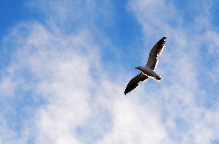 选择远程教育 实现人生飞跃